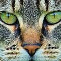 Green Eyez by Christopher D Elliott