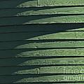 Green Facade by Roy Thoman