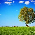 Green Field Landscape With A Single Tree by Michal Bednarek