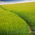 Green Field by Michael Hudson