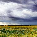 Green Fields by Eric Benjamin