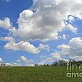 Green Fields by Neal Eslinger