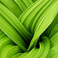 Green Folds by Karol Livote