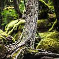 Green Forest by Aaron Aldrich