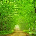 Green Forest Tunnel by Terri Gostola