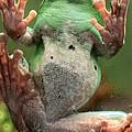 Green Frog by Munir Alawi