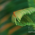 Green Frond  Abstract by Teresa Zieba