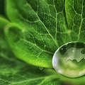 Green Globe by Susan Capuano