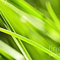 Green Grass Abstract by Elena Elisseeva