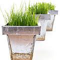 Green Grass by Edward Fielding