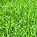Green Grass by FL collection