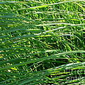 Green Grass Growing by Rose Santuci-Sofranko