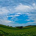 Green Grass Grows All Around by Jennifer Schoenholtz