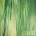 green grass by Priska Wettstein