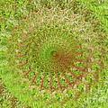 Green Grass Swirled by Rhonda Barrett