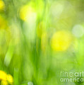 Green Grass With Yellow Flowers Abstract by Elena Elisseeva