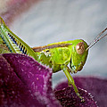 Green Grasshopper I by David and Carol Kelly