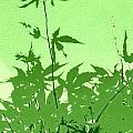 Green Green Haiku by Kathy Barney