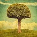Green Growing Lullaby by Brett Pfister