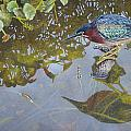 Green Heron IIi by Greg and Linda Halom