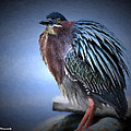 Green Heron Vignetted  by Bruce Nikle