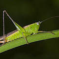 Green Hoppers by Naushad  Waheed