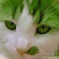Green Kitten by Anita Lewis