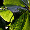 Green Leaf I by Nancy Mueller