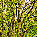 Green Leafy Trees by Alice Gipson