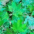 Green Leaves by Aimee L Maher ALM GALLERY