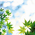 Green Leaves On Mottled Cloudy Sky by Panoramic Images