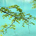 Green Leaves Over Blue Water by Nelson Peng