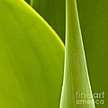 Green Leaves Series  1 by Heiko Koehrer-Wagner