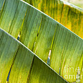 Green Leaves Series 14 by Heiko Koehrer-Wagner