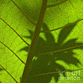 Green Leaves Series 3 by Heiko Koehrer-Wagner