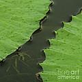 Green Leaves Series  4 by Heiko Koehrer-Wagner