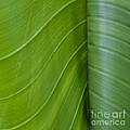 Green Leaves Series  6 by Heiko Koehrer-Wagner