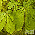 Green Leaves Series by Heiko Koehrer-Wagner