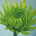 Green Light by Irina Wardas