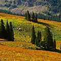 Green Mountain Trail by Raymond Salani III