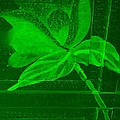 Green Negative Wood Flower by Rob Hans