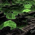 Green Odyssey by Bernard MICHEL