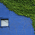 green on blue IMG 0964 by Greg Kluempers