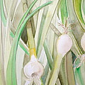 Green Onions by Debi Starr