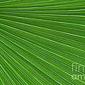 Green Palm Abstract by Kathleen Struckle