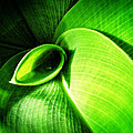 Green Paradise - Leaves By Sharon Cummings by Sharon Cummings