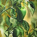 Green Peppers From Our Garden by Alfred Ng