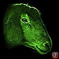 Green Polled Dorset Sheep - 1643 F by James Ahn