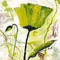 Green Poppy 003 by Voros Edit