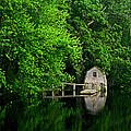 Green Reflections by Kerri Ann Crau